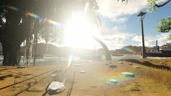 Thumbnail for Sunshine under the shady trees