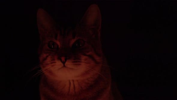 Light Flicker on a Cat on a Black Background