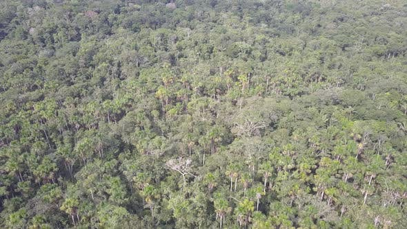 Aerial Drone Flyover of Amazon Rainforest Jungle Canopy Lush Vast Treetops Trees