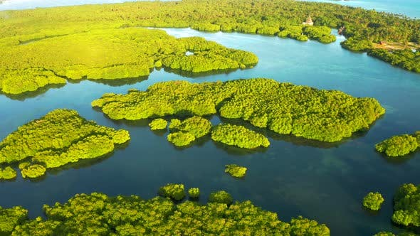 Thumbnail for Aerial View of River in Rainforest, Latin America