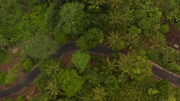 Top Down Aerial View of Two Motorcycles Driving on the Asphalt Road Through Tropical Rainforest