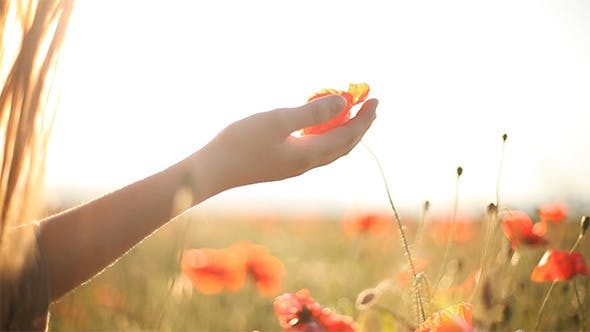 Thumbnail for Girl Looking At Wild Poppies