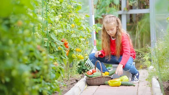 Adorable Little Girl Collecting Crop of Cucumbers, Pepers and Tomatoes in Greenhouse