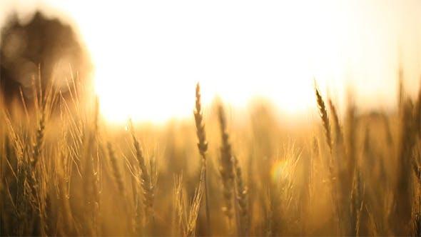 Thumbnail for Sliding Around Grain 2