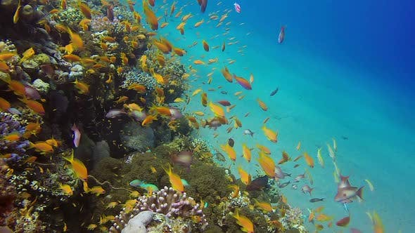 Cover Image for Underwater Colorful Reef