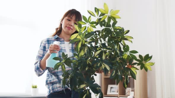 Thumbnail for Happy Asian Woman Cleaning Houseplant at Home 52