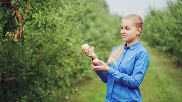 Cover Image for Woman Hand Picking an Apple