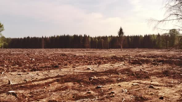 Thumbnail for Logged Forest of Land Beside Pine Tree Forest