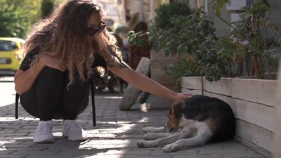 Girl with Long Curly Hair and Sunglasses Pets Homeless Dog