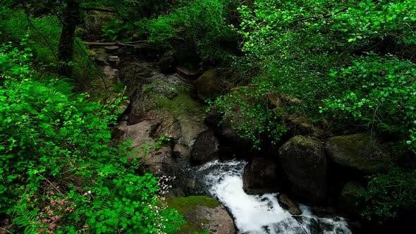 Deep Forest River