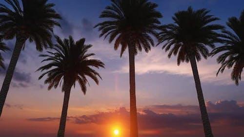 Palm Tree Row Sunset