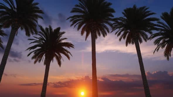 Thumbnail for Palm Tree Row Sunset