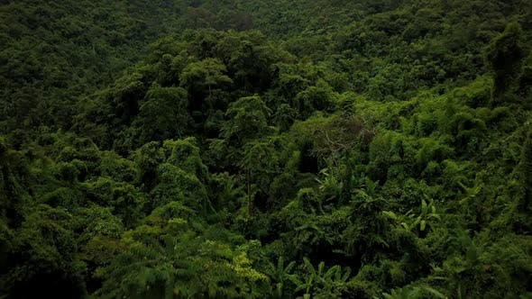 Thumbnail for Aerial View of Lush Green Rain Forest Mountain 29