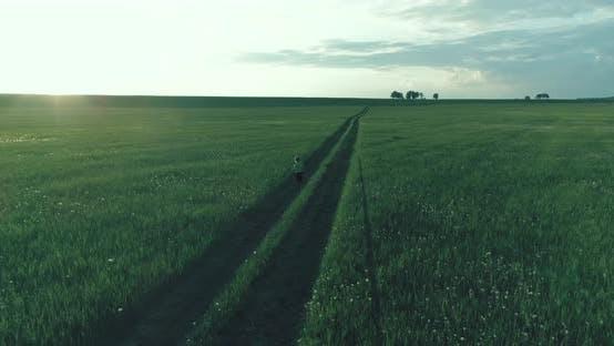 Thumbnail for Sporty Child Runs Through a Green Wheat Field