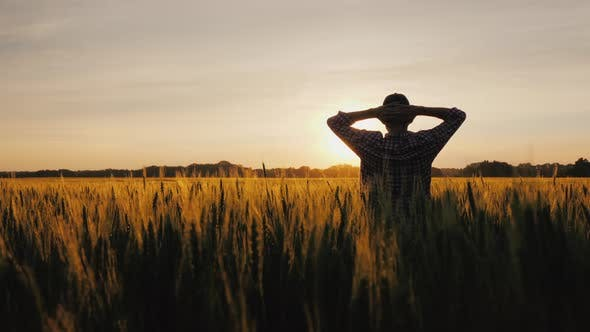 Thumbnail for A Silhouette of a Farmer, Standing in a Field of Wheat, Is Admiring a Beautiful Sunset Over His