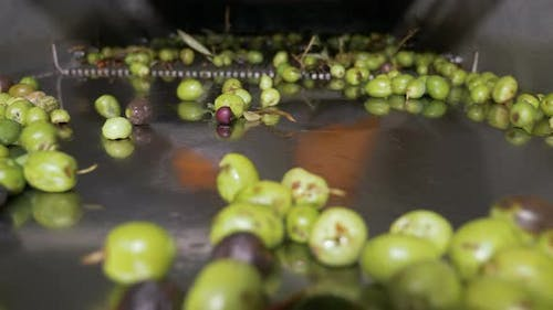 Olive oil production process- making olive oil in South of Italy