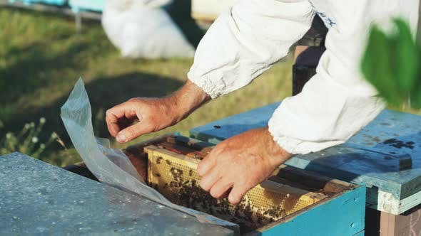 Beekeeper Works in the Apiary