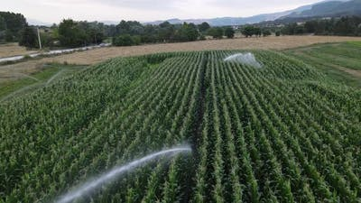 Agricultural Farm Watering