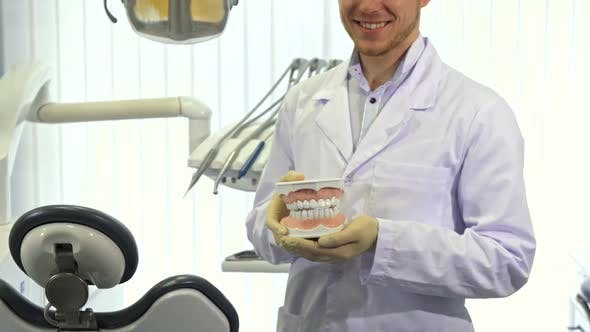 Thumbnail for Dentist Shows Layout of Human Teeth at the Office