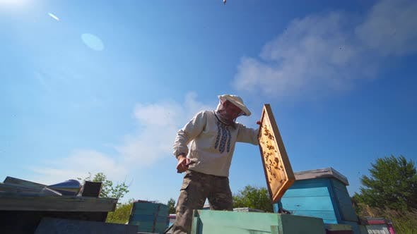Thumbnail for Man in protective hat on apiary