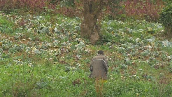 Thumbnail for Man  picking plants