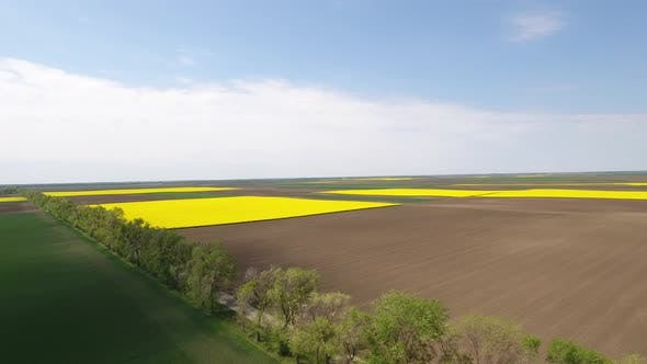 Agricultural Fields In Spring