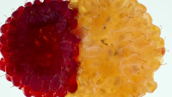 Thumbnail for Macro Video of Red and Yellow Raspberries Being Squeezed and Crushed on Hite Background