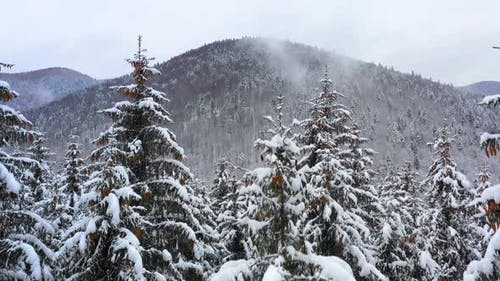 Mountain forest in winter season. Snowy tree branch in a view of the winter forest. Winter landscape