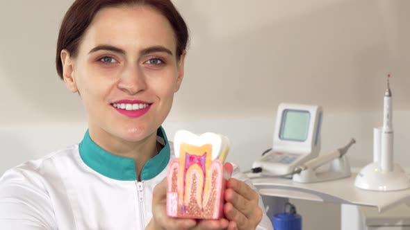 Thumbnail for Cheerful Female Dentist Holding Out Healthy Tooth Model To the Camera
