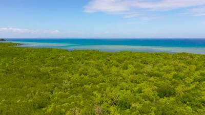 Coast with Mangroves and Sea