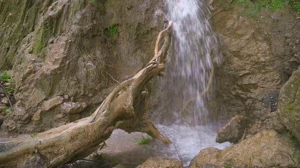 Cover Image for Waterfall And Tree