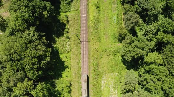 Train Moving on Railroad Through Green Summer Forest.