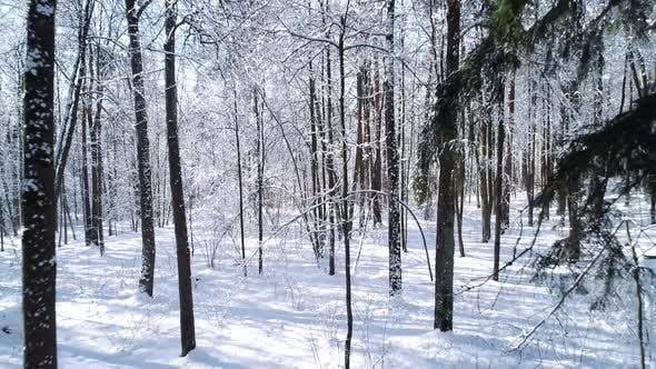Thumbnail for Flying Between the Trees in Snowy Forest Winter