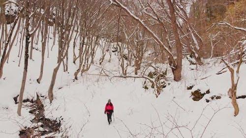 Caucasian Female Trekking Alone In Forest