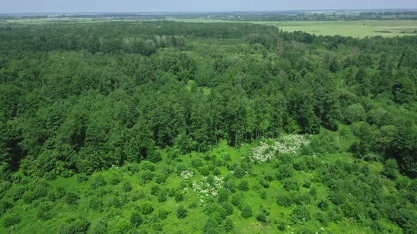 Cover Image for Aerial View Around The Forest