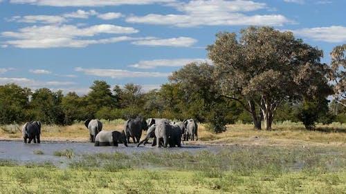 African Elephant on waterhole, Africa safari wildlife