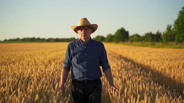 Man in hat among ripe wheat