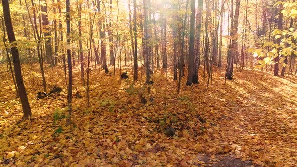 Thumbnail for Colorful Autumn Forest Wood