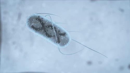 3D Realistic render of a bacterium