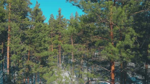 Thumbnail for Green Dense Pine Forest with Snow Hides Grey Road Upper