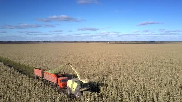 Thumbnail for Drone Flies Over Corn Harvester Pours Silomass Into Truck