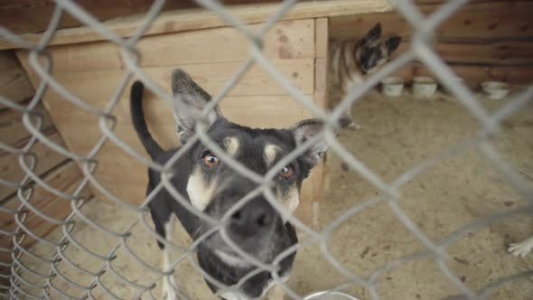 Thumbnail for Homeless Dogs in a Dog Shelter. Slow Motion