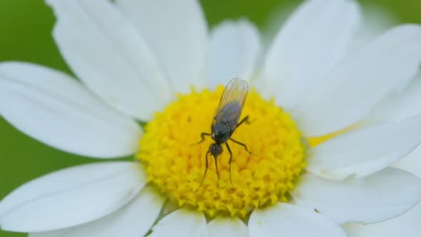 Cover Image for A Bug on a Daisy Flower
