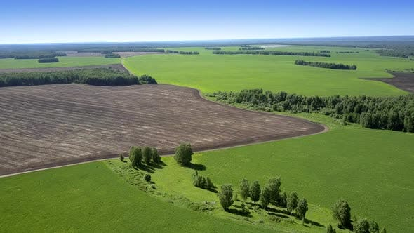 Wonderful Landscape with Mown Field and Rare Green Trees