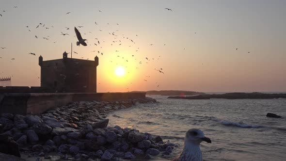 Thumbnail for Essaouira Fort Silhouette in Morocco