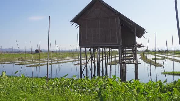 Thumbnail for Floating Gardens on Inle Lake, Myanmar (Burma)