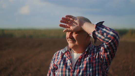 Cover Image for Senior Farmer in a Field Looking Into the Distance. Senior Farmer Standing in Soybean Field