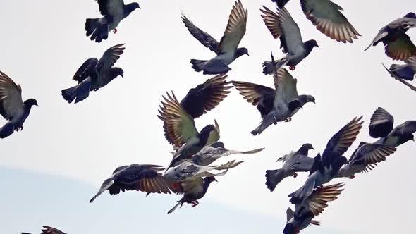 Thumbnail for Doves Flying