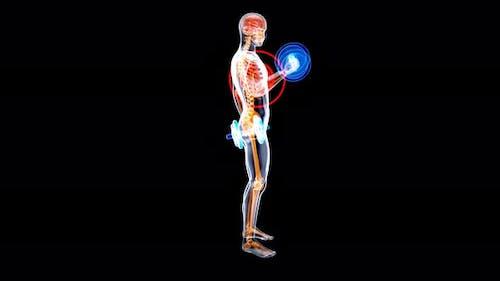 4K Anatomie eines Röntgenmannes, der Bizeps-Locken macht