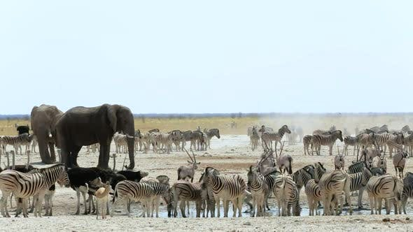 Waterhole in Etosha with many animals